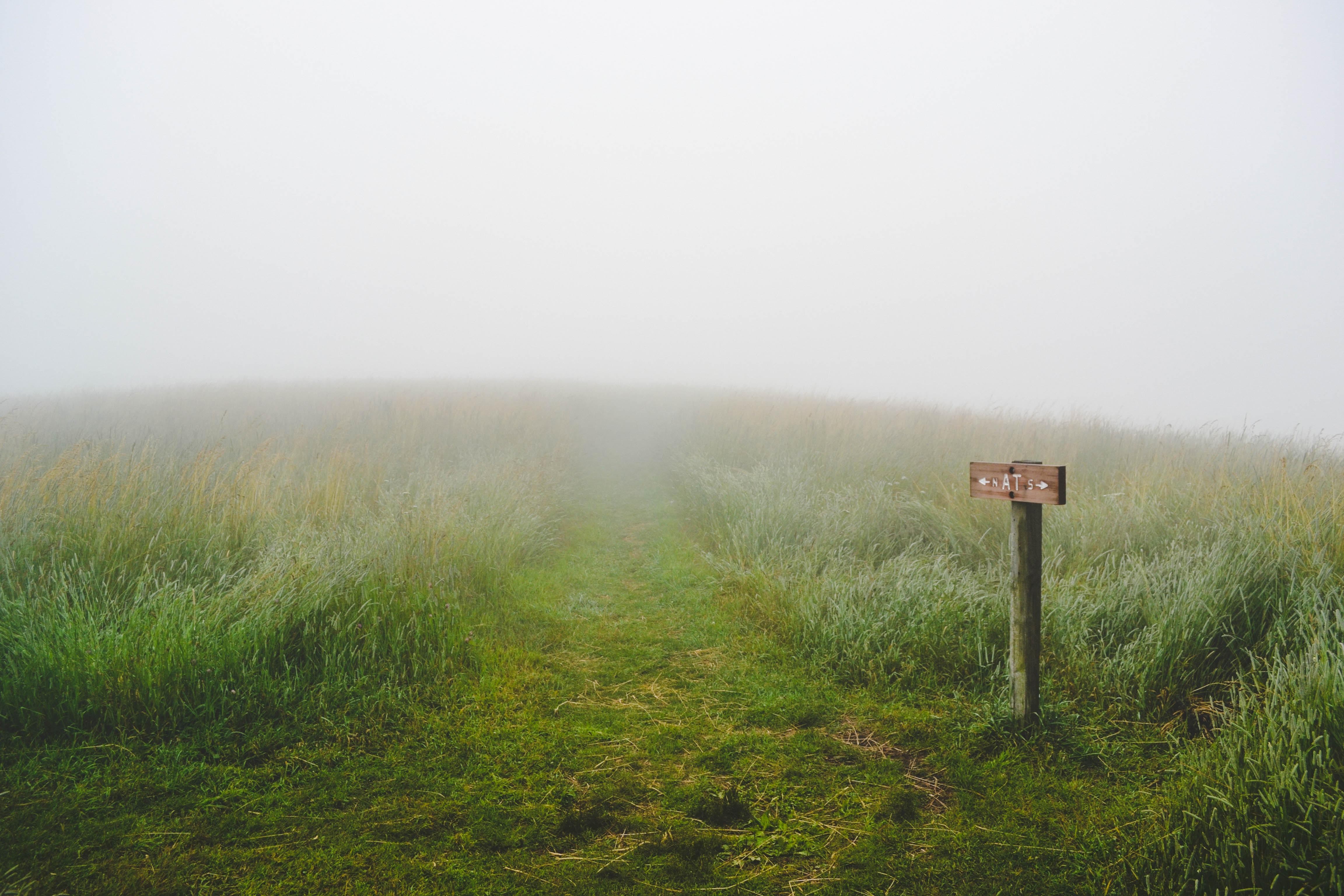 Wohin führt das Schild? Foto: Evelyn Mostrom on Unsplash